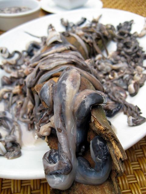 tamilok of palawan