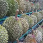 Where to Eat Durian in Davao